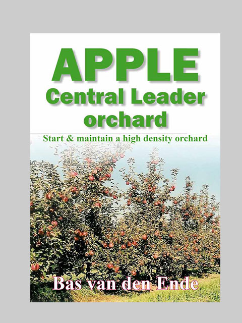 Apple Central Leader orchard (buy)