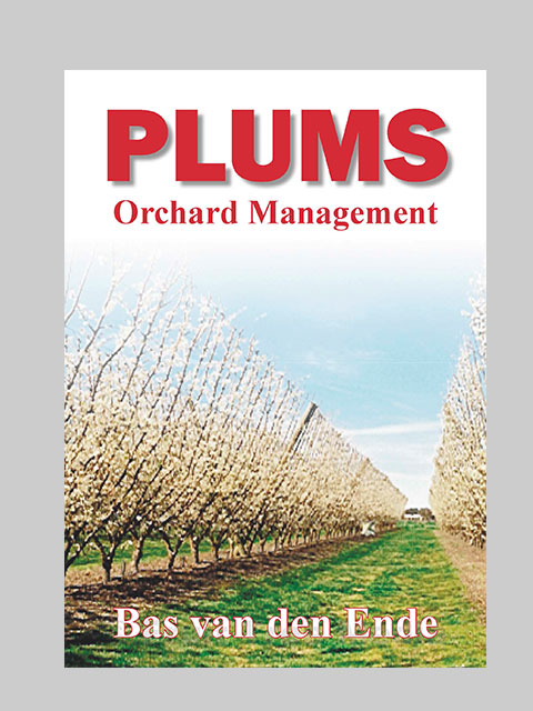 Plum management (buy)
