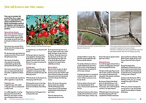 Understand fruit trees